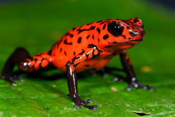 frog stretch